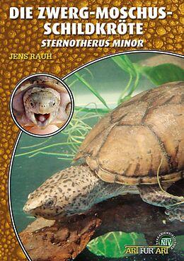 Die Zwerg-Moschusschildkröte